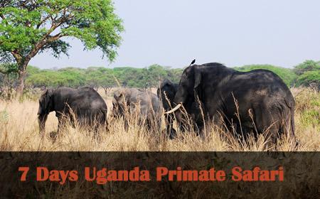 7 Days Uganda wildlife safari