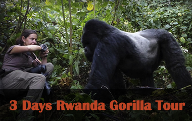 3 days rwanda gorilla trek