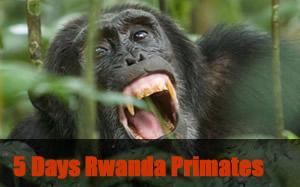 5 Days Primates tour Rwanda