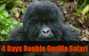 rwanda double gorilla trekking