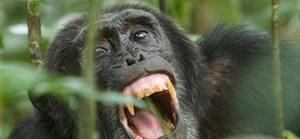 gorilla safari in Bwindi